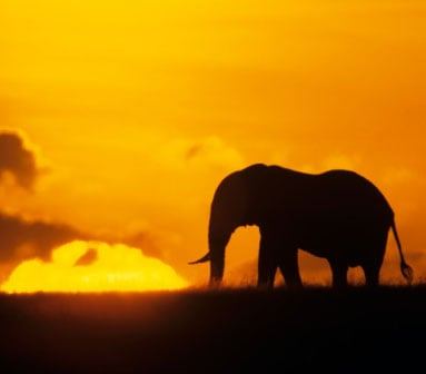 The Endangered Species List 2008