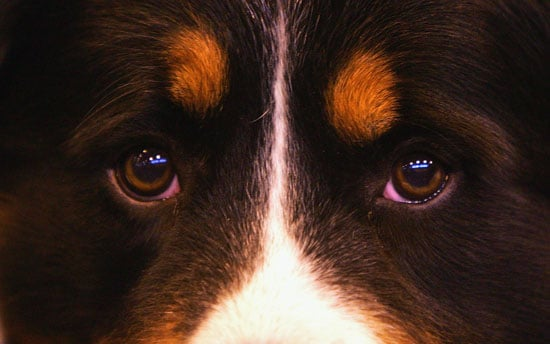 How Many Colors Are Featured on Your Pet's Fur?