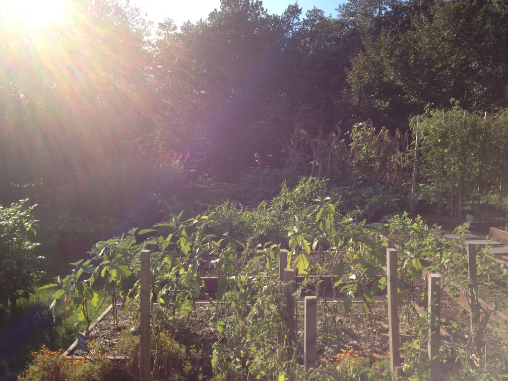 A Recently Harvested Section of the Garden