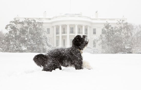 Bo Obama Takes a Bite Outta . . . Snow