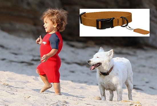 Sugar Shout Out: Found Levi McConaughey's Dog BJ's Collar!