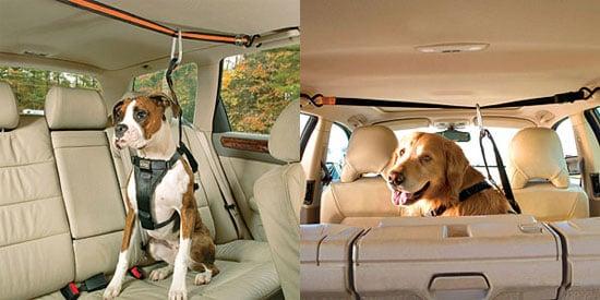 Pampered Pals: Zip Line Dog Car Harnesses