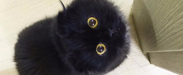 21 Not-So-Scary Black Cats, Because They Need Love, Too