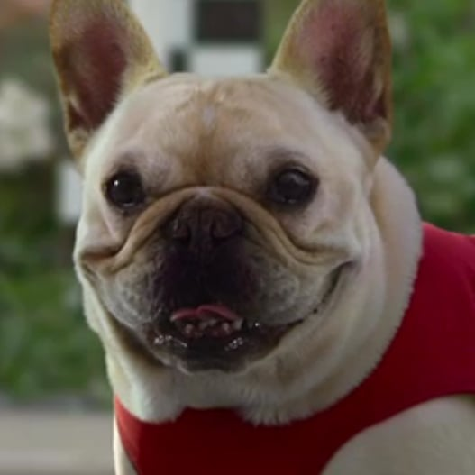 Funniest 2012 Super Bowl Animal Commercials