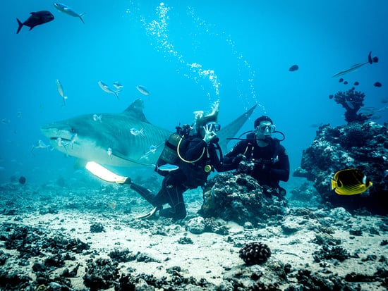 WATCH: Film Director Eli Roth and a PEOPLE Staffer Come Face-to-Face with a 17-foot Tiger Shark