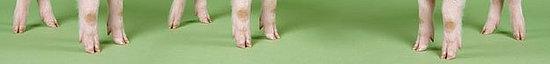 Want Beautiful Skin? Try Eating Piggy Feet