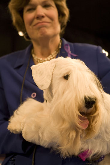 Charmin Takes the Crown at the 2008 AKC/Eukanuba National Championship