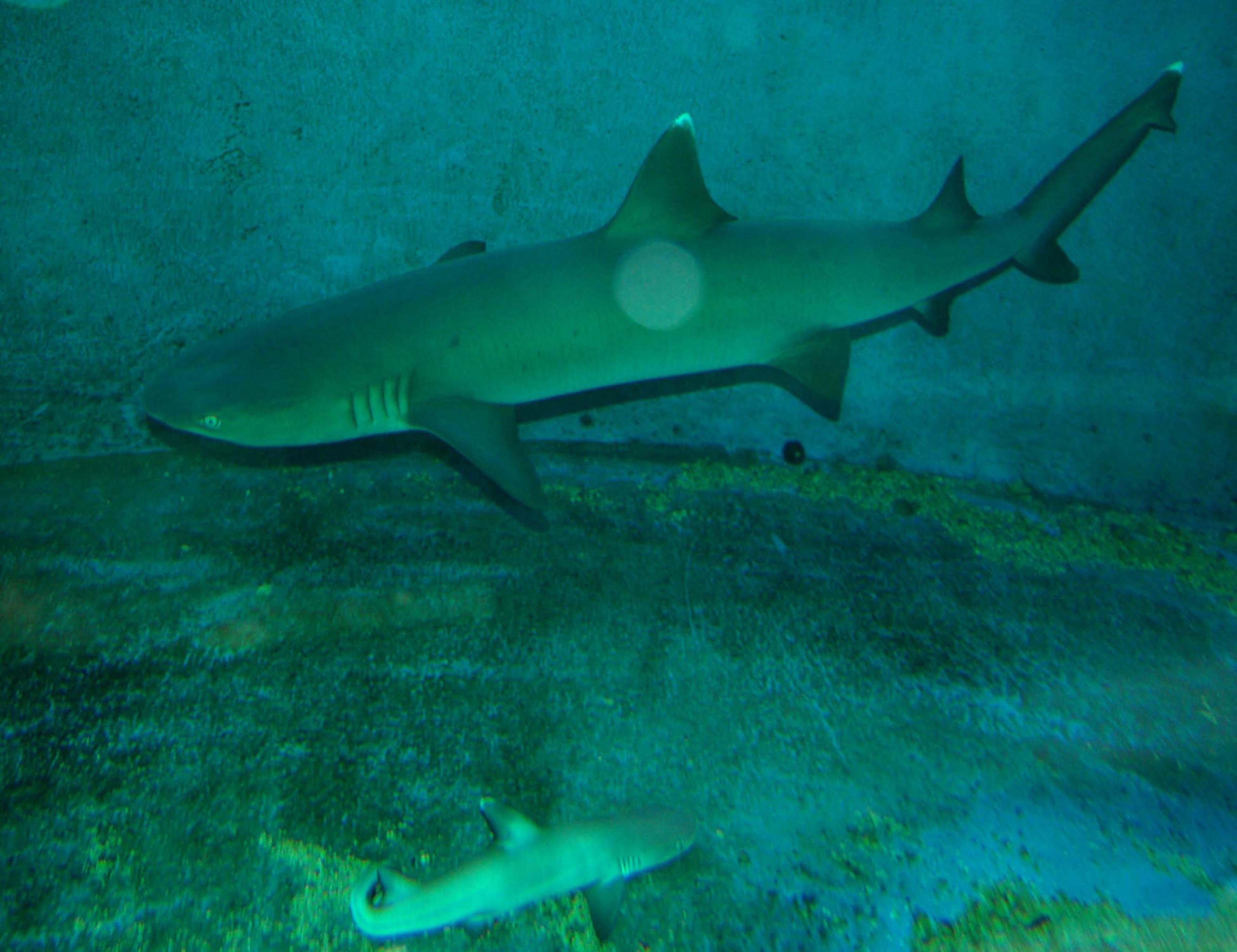 The Scoop: Shark Virgin Welcomes Baby!
