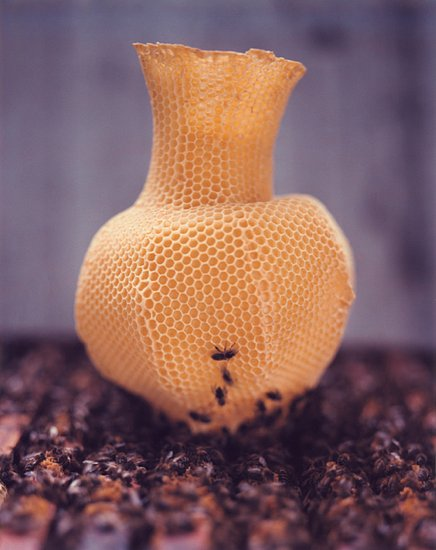 Coolest Idea: Honeycomb Vase