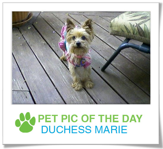 Pet Pics on PetSugar 2008-12-08 09:30:42
