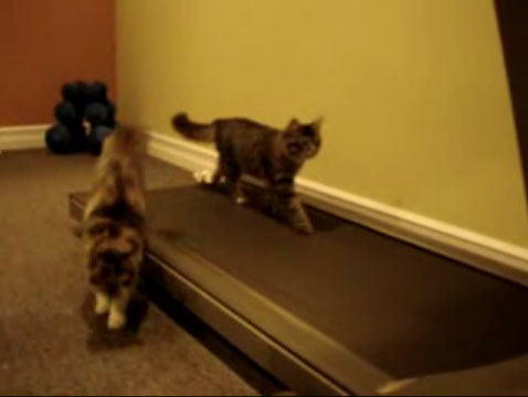 If These Cats Can Do It, You Can, Too!