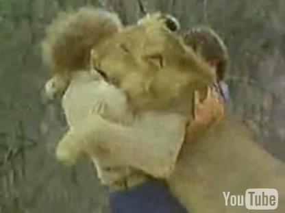 Cute Alert: Lion Has Two Daddies