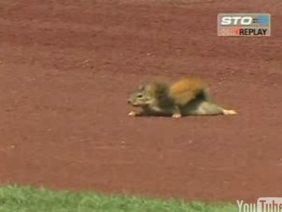 Squirrel Disrupts Baseball Game