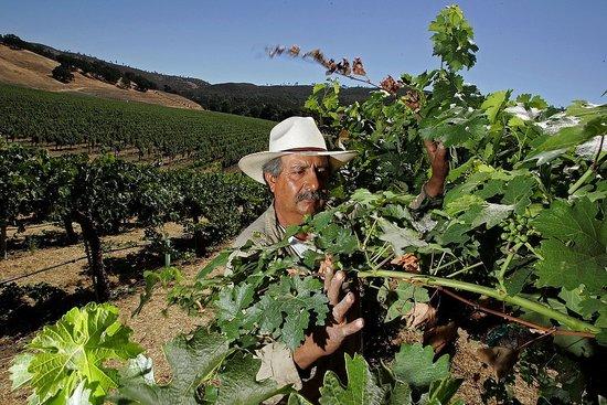 Sonoma and Mendocino Wine Regions Prepare For Dry Spell