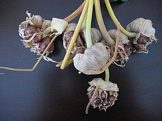 Scape: The Other Side of Garlic
