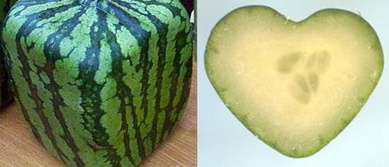 Love It or Hate It: Fruit Molds
