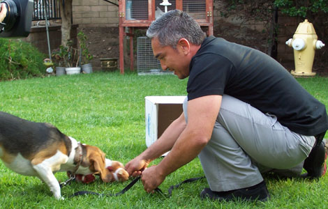Learn Cesar Millan's Methods Online