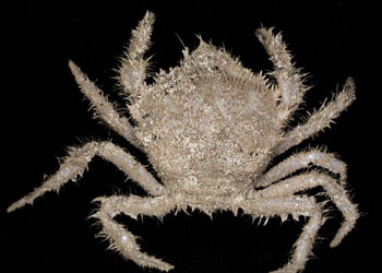 278 New Ocean Species Found off Tasmania