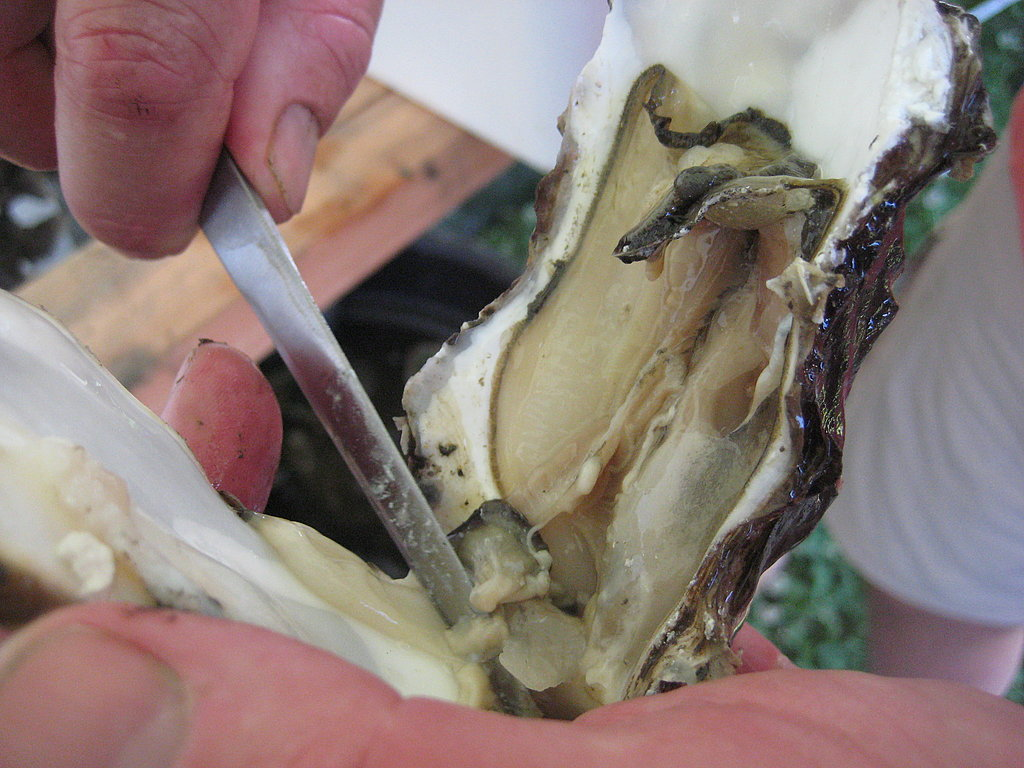 After the shell has popped open, it's customary to cut the muscle from the bottom shell and flip the oyster over. This makes for prettier presentation.