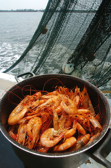 Yummy Links: From Crustaceans to Food Trends