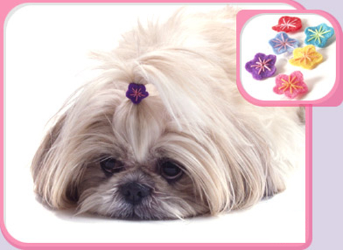 Trend Setters: Preppy Pets Rock . . . Bows and Barrettes