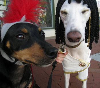 Out and About: Santa Barbara's Big Dog Parade