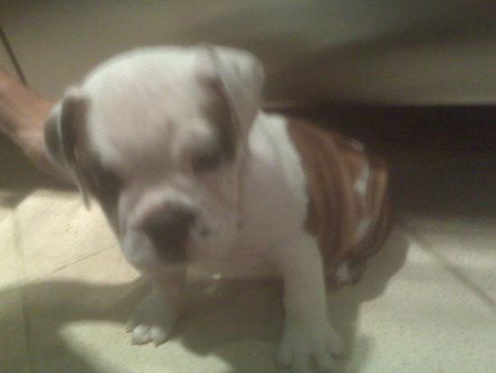 New Puppy Alert! Pete Wentz and Ashlee Simpson-Wentz