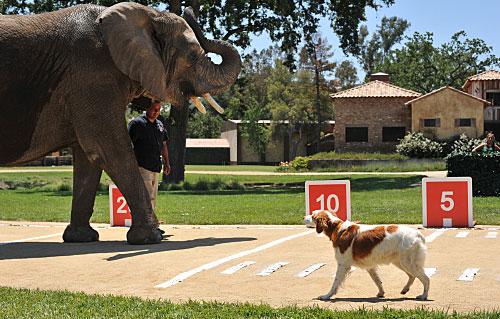 Greatest American Dog Recap: My Dog Can Fly!