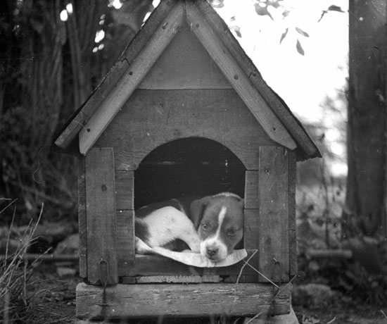 Get Out of the Doghouse With This Ruff Idiom Quiz, Take Two!