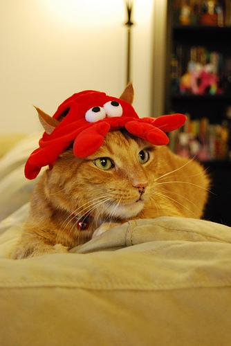 Ta-da! Lobster