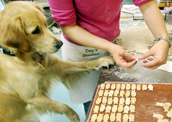 Baking These Homemade Dog Cookies For Holiday Gifts Is One Yummy Idea!