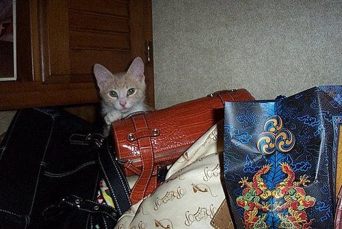 "OK, This isn't exactly ""IN"" my handbag.......LOL......"