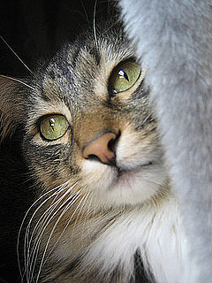 Cat Lady Style