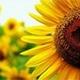 Sunshinelover