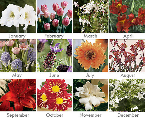Cool Idea: Twelve Months of Flowering Plants