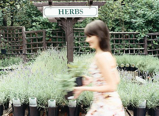 DIY: Grow an Herb Garden Indoors