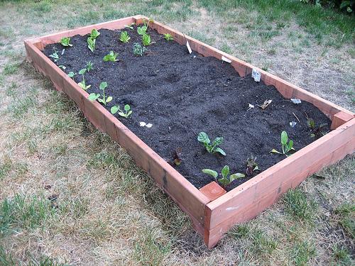 Awesome ... Designs Box Garden