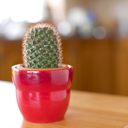 Room Therapy:  Low-Maintenance House Plants?