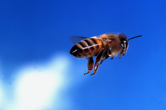 Casa Quickie: Keeping Bees Away From Your Pool