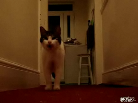 "Cat ""Talks"" With an English Accent"