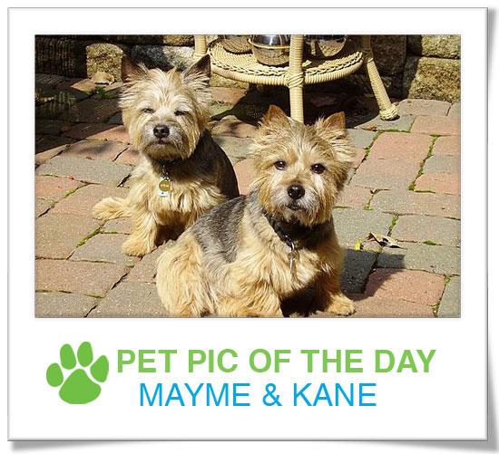 Pet pics on PetSugar 2009-03-09 09:30:43