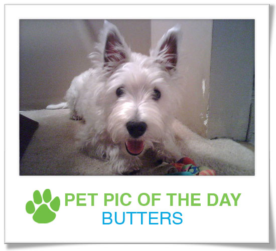 Pet Pics on PetSugar 2009-03-13 09:30:18