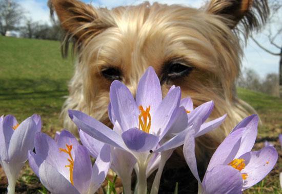 PetSugar's Weekly Recap Quiz 2009-03-28 03:00:20