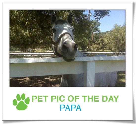Pet Pics on PetSugar 2009-04-16 08:45:41