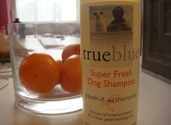 True Blue Grapefruit and Chamomile Dog Shampoo Review