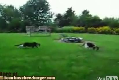 When Ninja Cats Attack