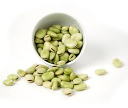 Beginner Fava Bean & Pecorino Salad