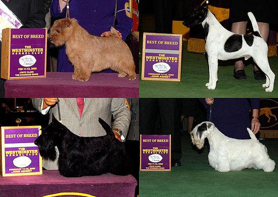 Terrier Group