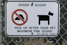 For dog owners (obviously)--how many times does your dog go out?
