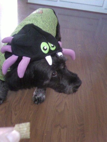 Spider Pup